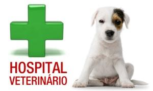 hospital-veterinario2