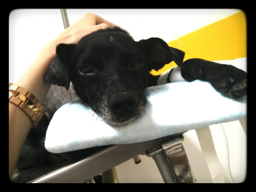 ultimos-momentos-cachorro-doente3